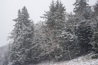 Photograph - Snowstorm by Robert Potts