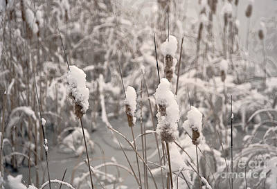 Photograph - Snowtails by Fred Lassmann
