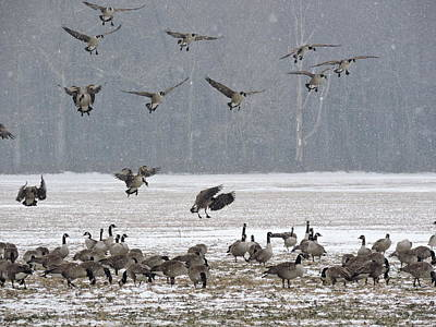 Photograph - Snowy Approach by John Flack