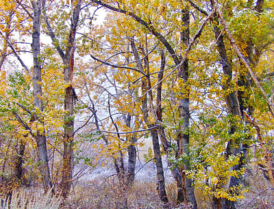 Photograph - Snow And Golden Leaves by Marilyn Diaz