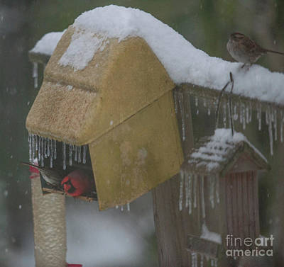 Photograph - Snowy Bird Feeder by Dale Powell
