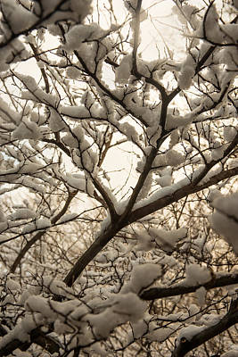 Photograph - Snowy Blanket by Dana Sohr