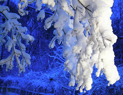 Photograph - Snowy Blue Morning by Susan Lafleur