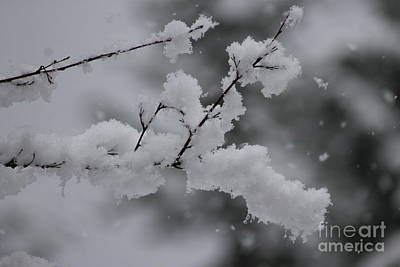 Photograph - Snowy Branch by Leone Lund