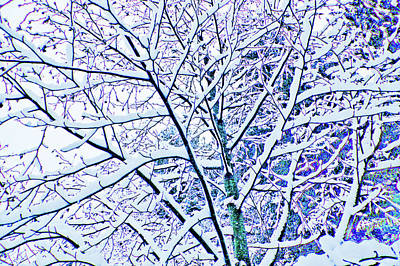 Photograph - Snowy Branches by Adria Trail