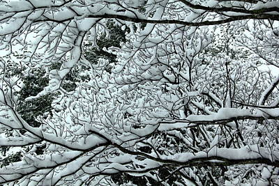 Photograph - Snowy Branches by Allen Nice-Webb