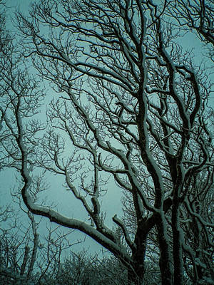 Photograph - Snowy Branches by Richard Brookes