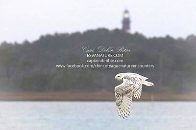 Photograph - Snowy By Lighthouse by Captain Debbie Ritter