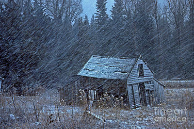 Tree Photograph - Snowy Cabin by Gary Wing