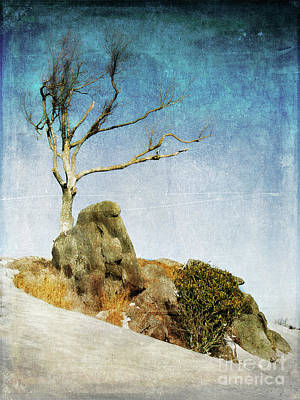 Photograph - Snowy Centerpiece In The Blue Ridge Fx by Dan Carmichael