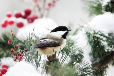 Mixed Media - Snowy Chickadee Bird by Christina Rollo