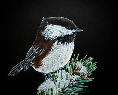 Snowy Chickadee Art Print by Kelly Strope