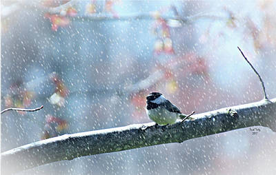 Mixed Media - Snowy Chickadee by Trish Tritz
