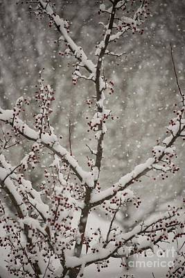 Photograph - Snowy Crabapples by David Bearden
