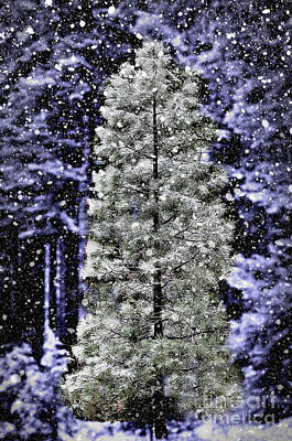 Photograph - Snowy Day Pine Tree by Jim And Emily Bush