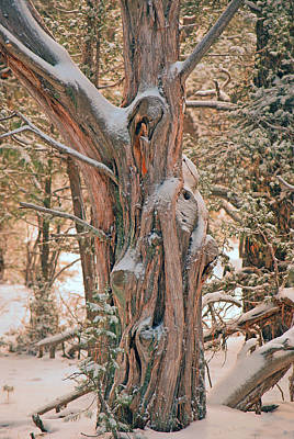Photograph - Snowy Dead Tree by Donna Greene