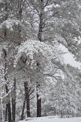 Photograph - Snowy December by Maria Urso