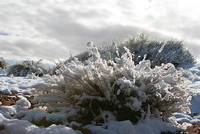 Snowy Desert Plant Art Print