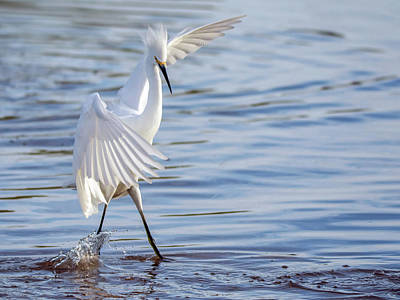 Photograph - Snowy Egret 0322-111217-1cr by Tam Ryan
