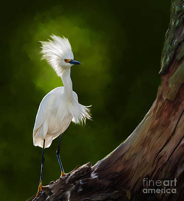 Linda King Photograph - Snowy Egret Artwork 5154 by Linda King
