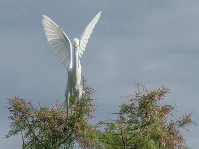 Photograph - Snowy Egret 6844-100517-2 by Tam Ryan