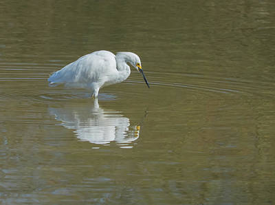 Photograph - Snowy Egret 9260-022118-1cr by Tam Ryan