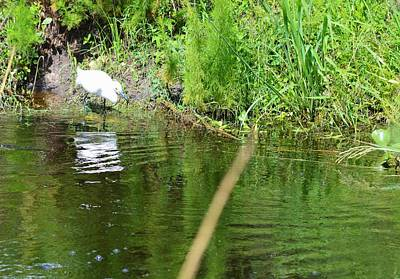 Photograph - Snowy Egret And Reflections by Warren Thompson