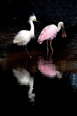 Photograph - Snowy Egret And Roseate Spoonbill by Serge Skiba