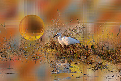 Photograph - Snowy Egret At Sunset by rd Erickson