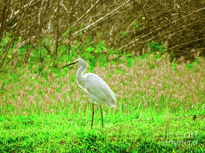 Photograph - Snowy Egret  by Camille Pascoe
