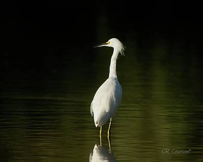 Photograph - Snowy Egret by CR Courson