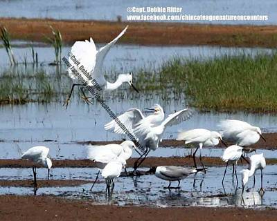 Ritter Park Photograph - Snowy Egret Territory by Captain Debbie Ritter