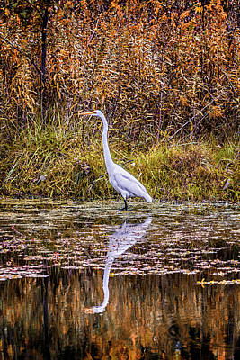 Photograph - Snowy Egret Forest Park_dsc1858 by Greg Kluempers