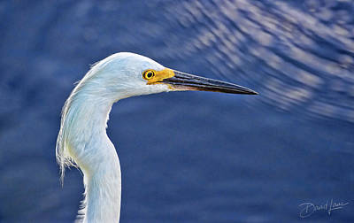 Photograph - Snowy Egret Head by David A Lane