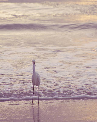 Photograph - Snowy Egret  by Heidi Hermes