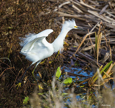 Photograph - Snowy Egret In Flight by Fran Gallogly