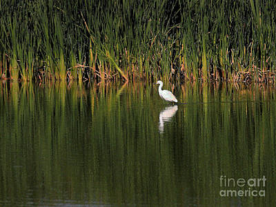 Egret Digital Art - Snowy Egret In Marsh Reinterpreted by Wingsdomain Art and Photography