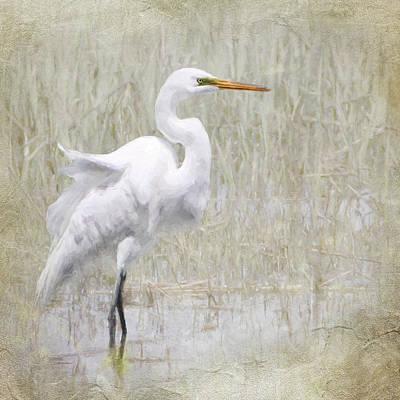 Photograph - Snowy Egret by Karen Lynch