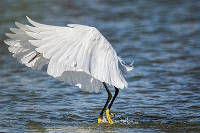 Photograph - Tutu Bird by Saija Lehtonen