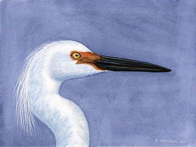 Painting - Snowy Egret Portrait by Charles Harden
