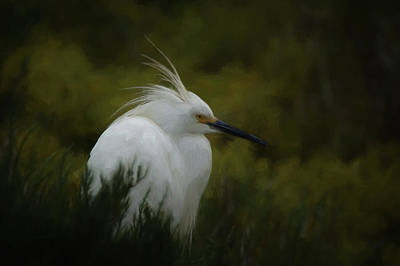 Digital Art - Snowy Egret Portrait Da by Ernie Echols