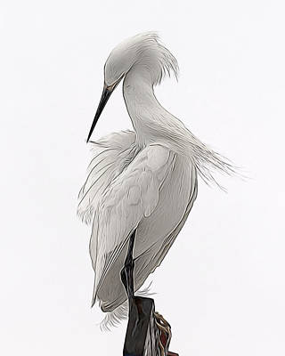 Digital Art - Snowy Egret Preening 1 by Ernie Echols