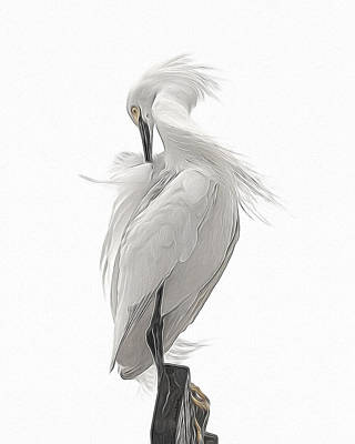Digital Art - Snowy Egret Preening 2 by Ernie Echols