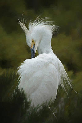 Digital Art - Snowy Egret Preening 3 Da by Ernie Echols