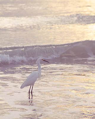 Photograph - Snowy Egret Profile by Heidi Hermes
