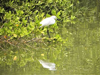 Photograph - Snowy Egret by Ric Schafer