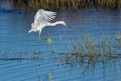 Colorful Photograph - Snowy Egret by Rick Higgins