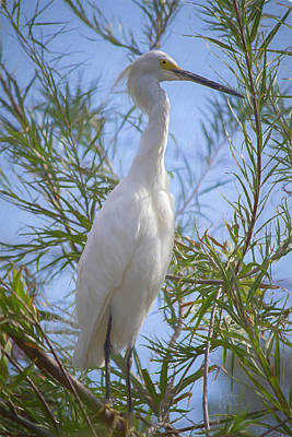 Photograph - Snowy Egret by Teresa Wilson