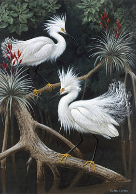 Florida Wildlife Photograph - Snowy Egrets Display Their Courtship by Walter A. Weber