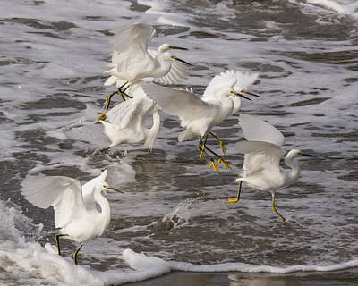 Snowy Egrets In The Surf Art Print